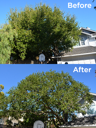 Tree Trimming Services in Honolulu, HI
